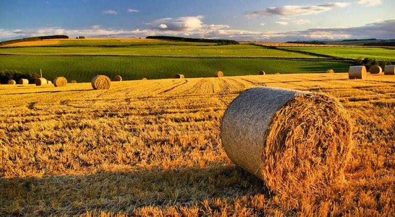 """E' ora disponibile la pubblicazione """"Piani di Welfare di Conciliazione nelle aziende agricole"""""""